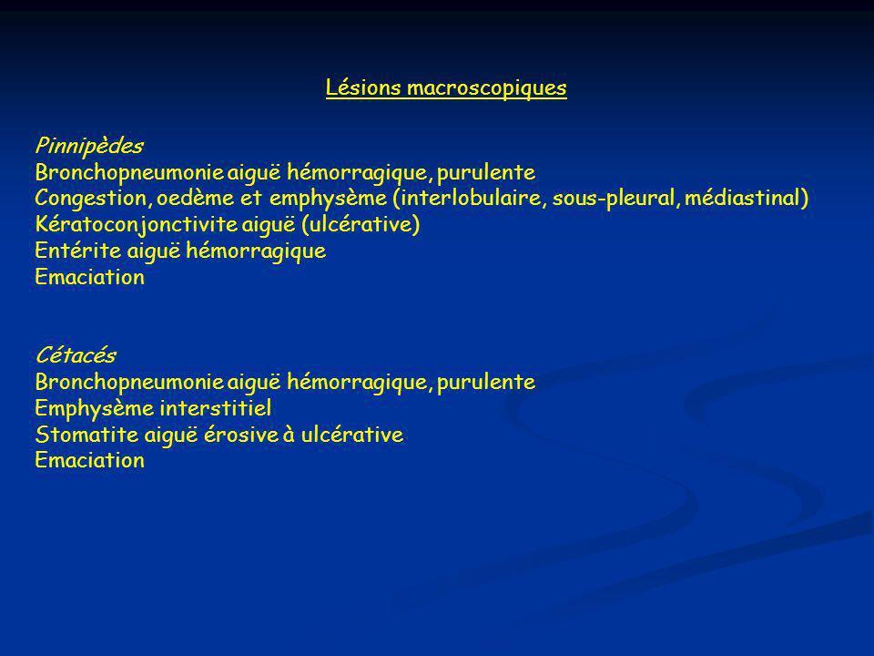 Lésions macroscopiques