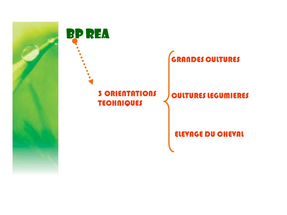 BP REA GRANDES CULTURES 3 ORIENTATIONS TECHNIQUES CULTURES LEGUMIERES