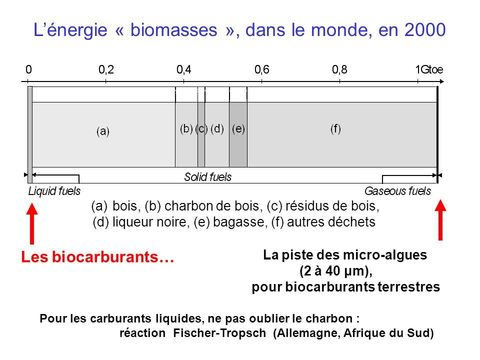 L'énergie « biomasses », dans le monde, en 2000