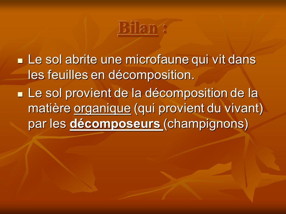 Bilan : Le sol abrite une microfaune qui vit dans les feuilles en décomposition.