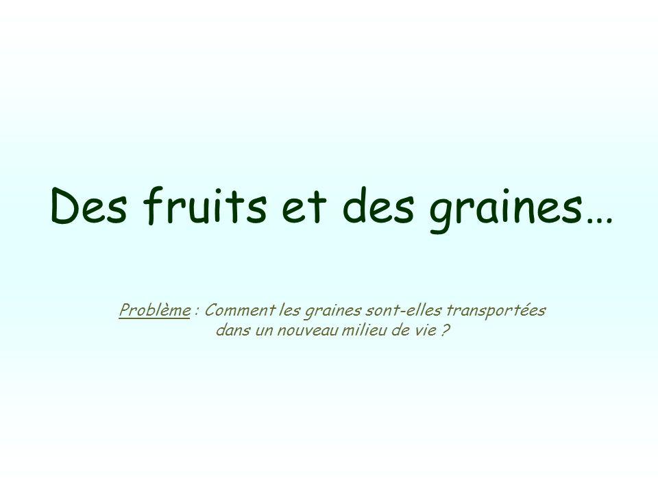 Des fruits et des graines…
