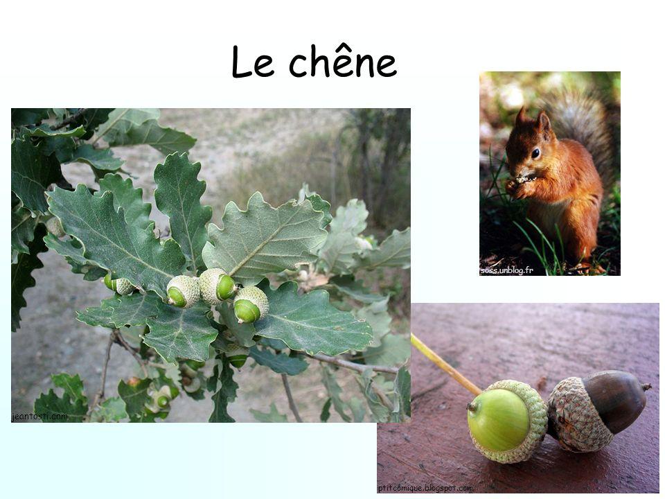 Le chêne soss.unblog.fr jeantosti.com ptitcomique.blogspot.com
