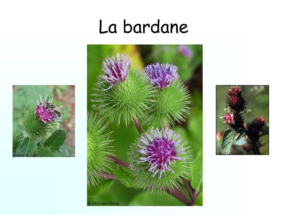La bardane larodz.chez-alice.fr jeantosti.com