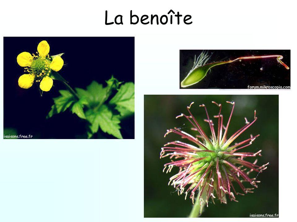 La benoîte forum.mikroscopia.com isaisons.free.fr isaisons.free.fr
