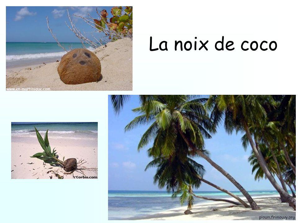 La noix de coco www.en-martinique.com ploum.frimouvy.org