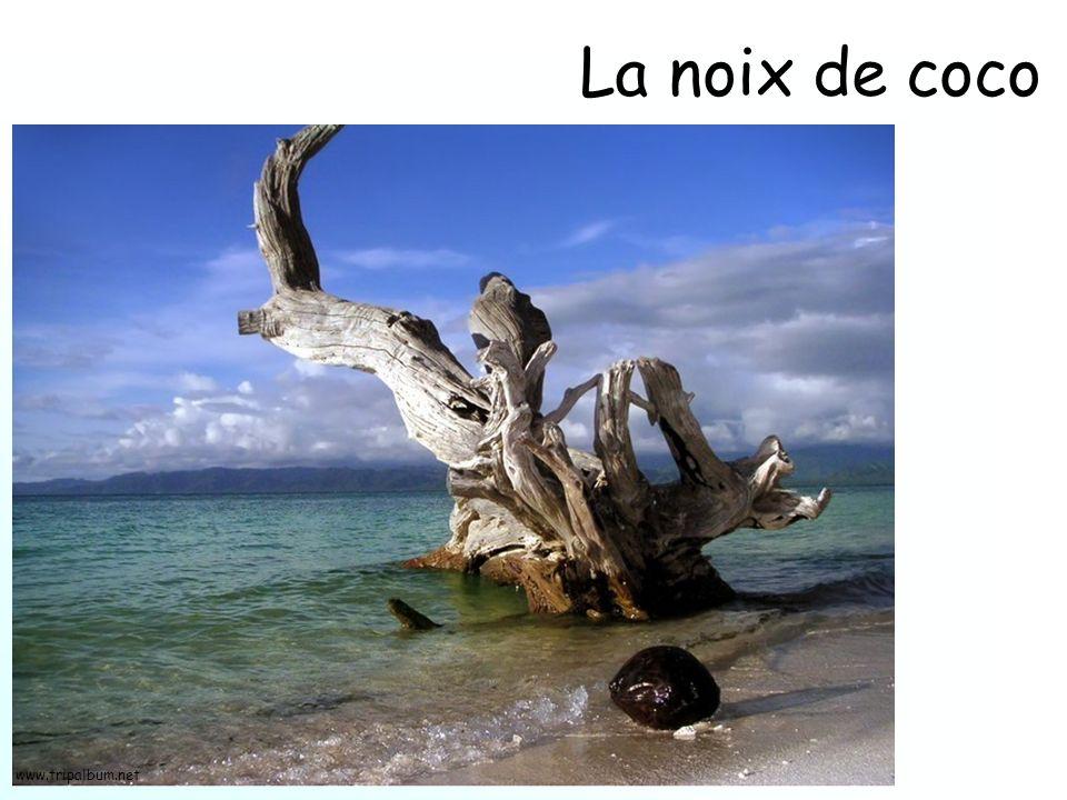 La noix de coco www.tripalbum.net