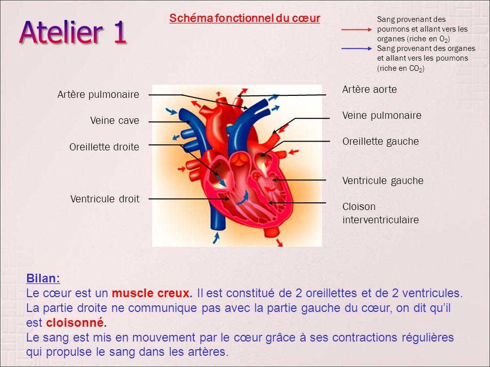Schéma fonctionnel du cœur