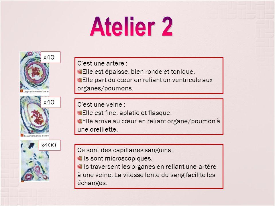 Atelier 2 x40 C'est une artère :