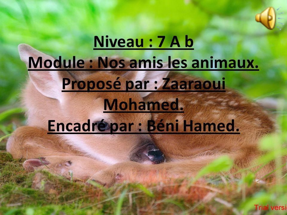 Niveau : 7 A b Module : Nos amis les animaux