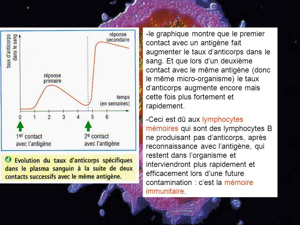 le graphique montre que le premier contact avec un antigène fait augmenter le taux d'anticorps dans le sang. Et que lors d'un deuxième contact avec le même antigène (donc le même micro-organisme) le taux d'anticorps augmente encore mais cette fois plus fortement et rapidement.