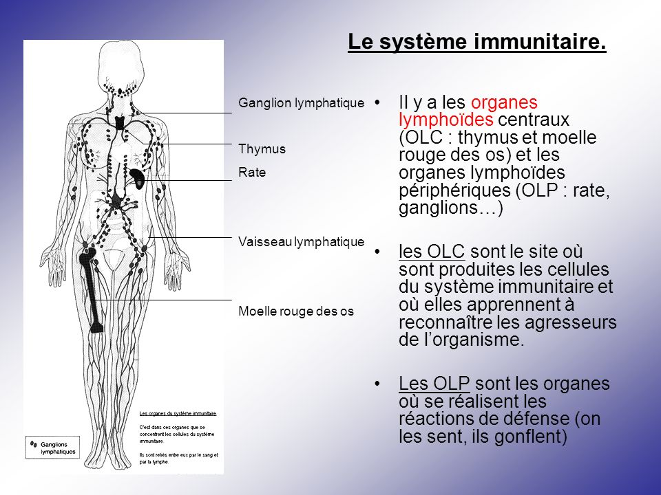 Le système immunitaire.
