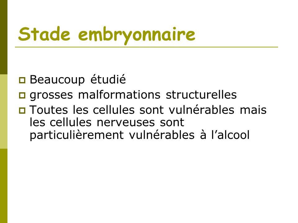 Stade embryonnaire Beaucoup étudié grosses malformations structurelles