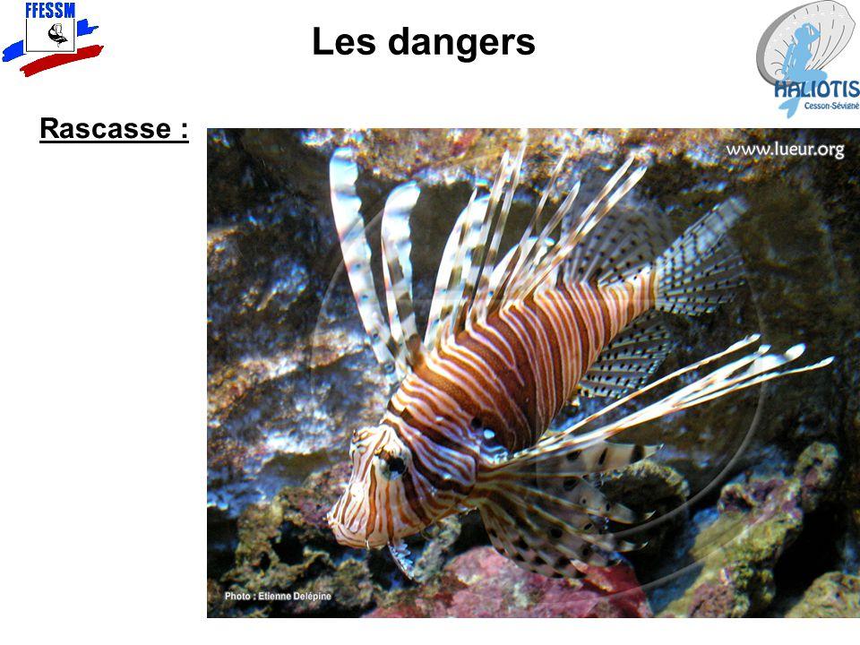 Les dangers Rascasse :