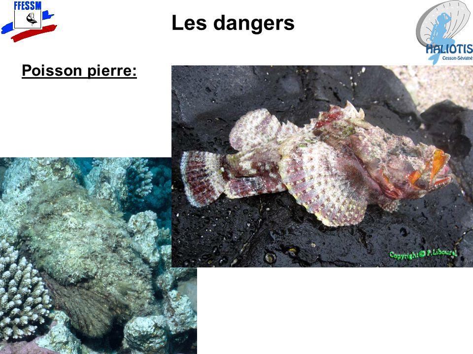 Les dangers Poisson pierre: