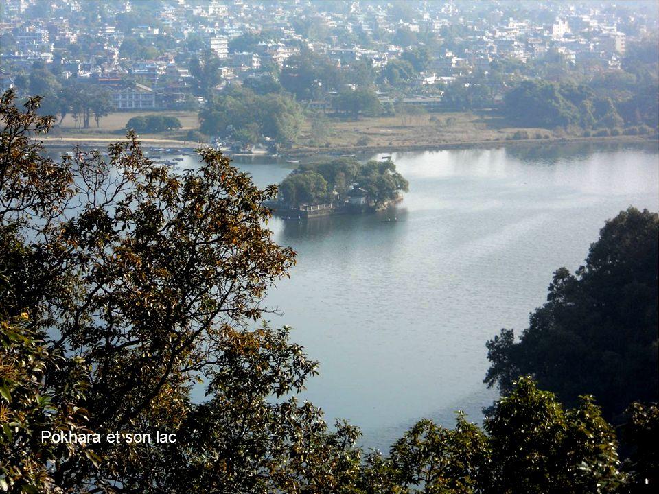 Les femmes rament énergiquement sur le lac de Pokhara , transportant des matériaux sur l'autre rive ou du riz .