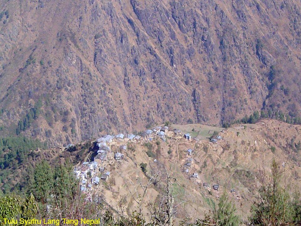 Tulu Syafru Lang Tang Nepal