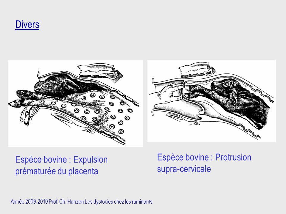 Divers Espèce bovine : Protrusion supra-cervicale