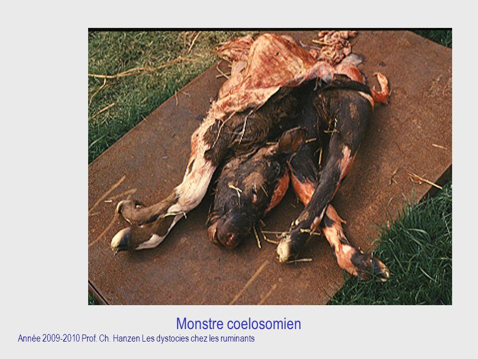 Monstre coelosomien Année 2009-2010 Prof. Ch. Hanzen Les dystocies chez les ruminants