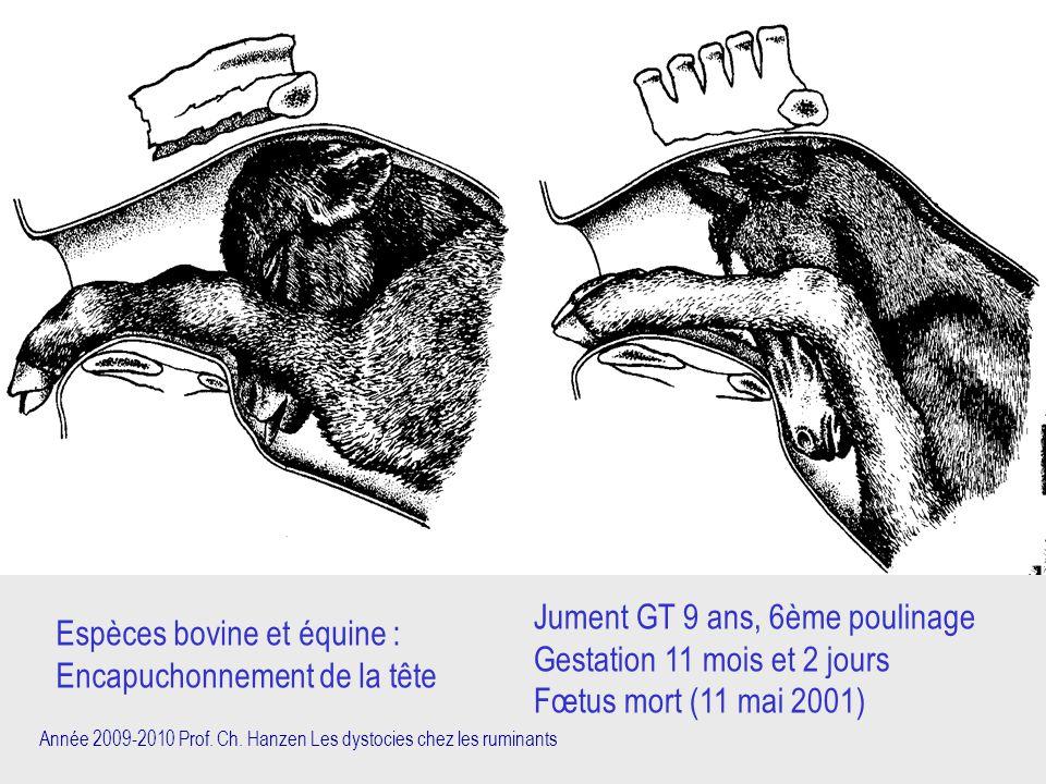 Jument GT 9 ans, 6ème poulinage Gestation 11 mois et 2 jours
