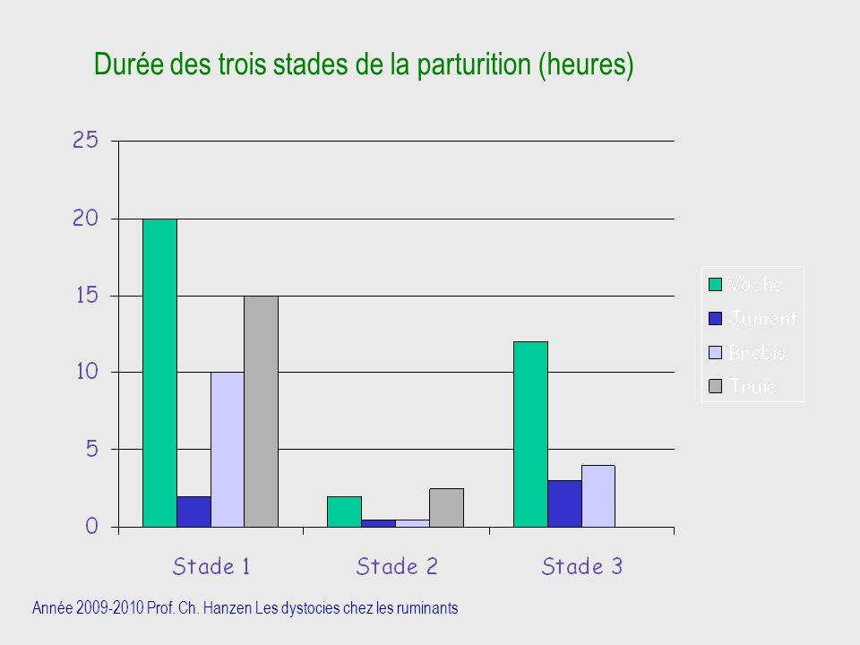 Durée des trois stades de la parturition (heures)