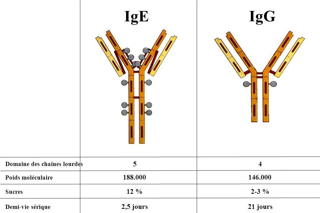 IgEIgG. Domaine des chaines lourdes. 5. 4. Poids moléculaire. 188.000. 146.000. Sucres. 12 % 2-3 % Demi-vie sérique.