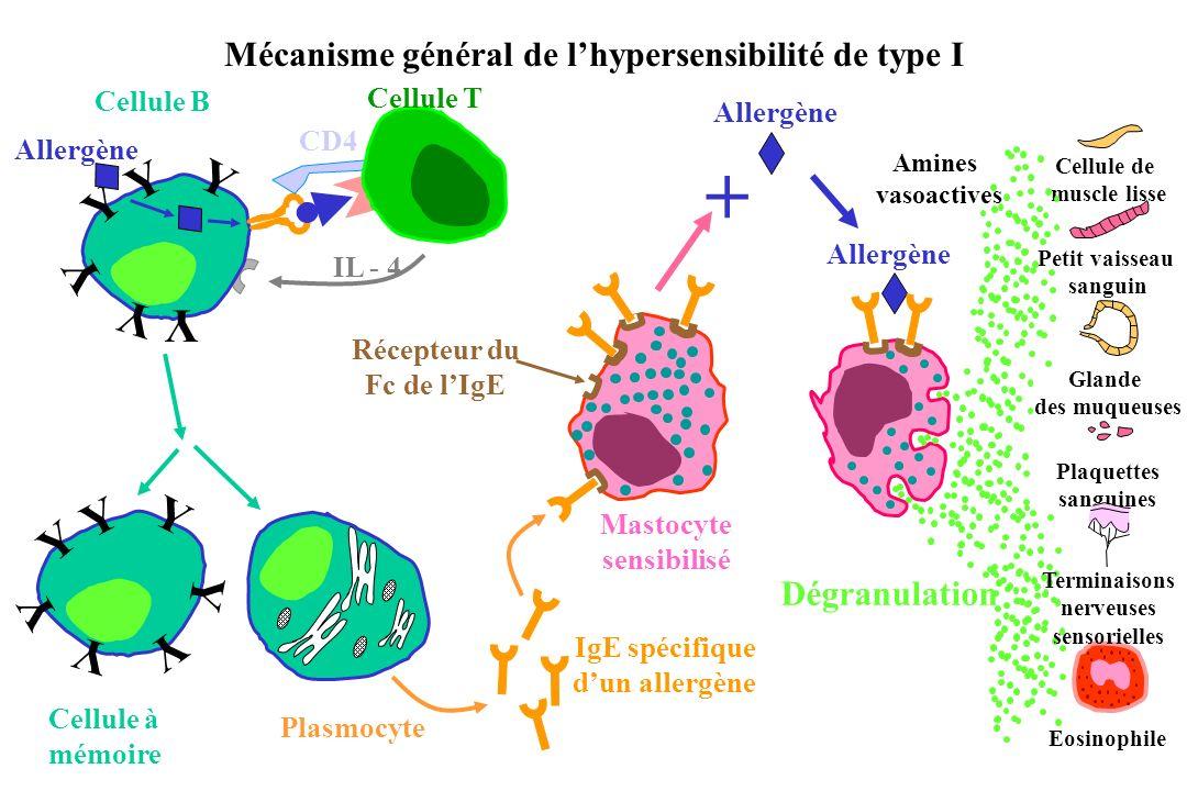 Mécanisme général de l'hypersensibilité de type I