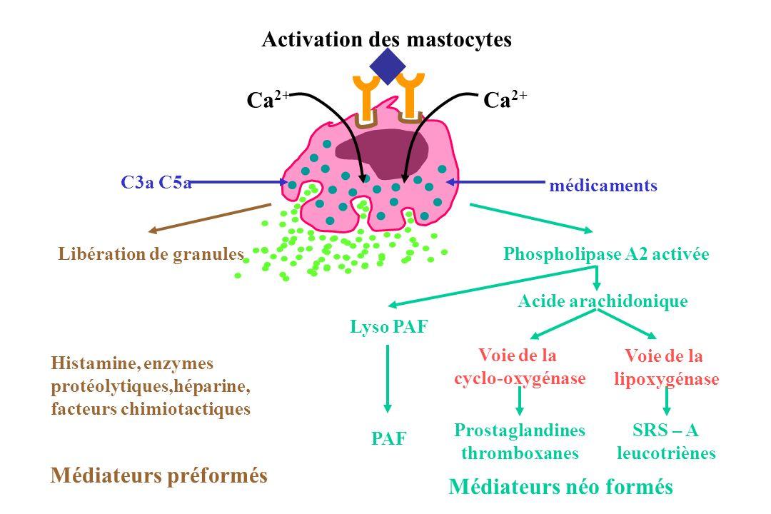 Activation des mastocytes