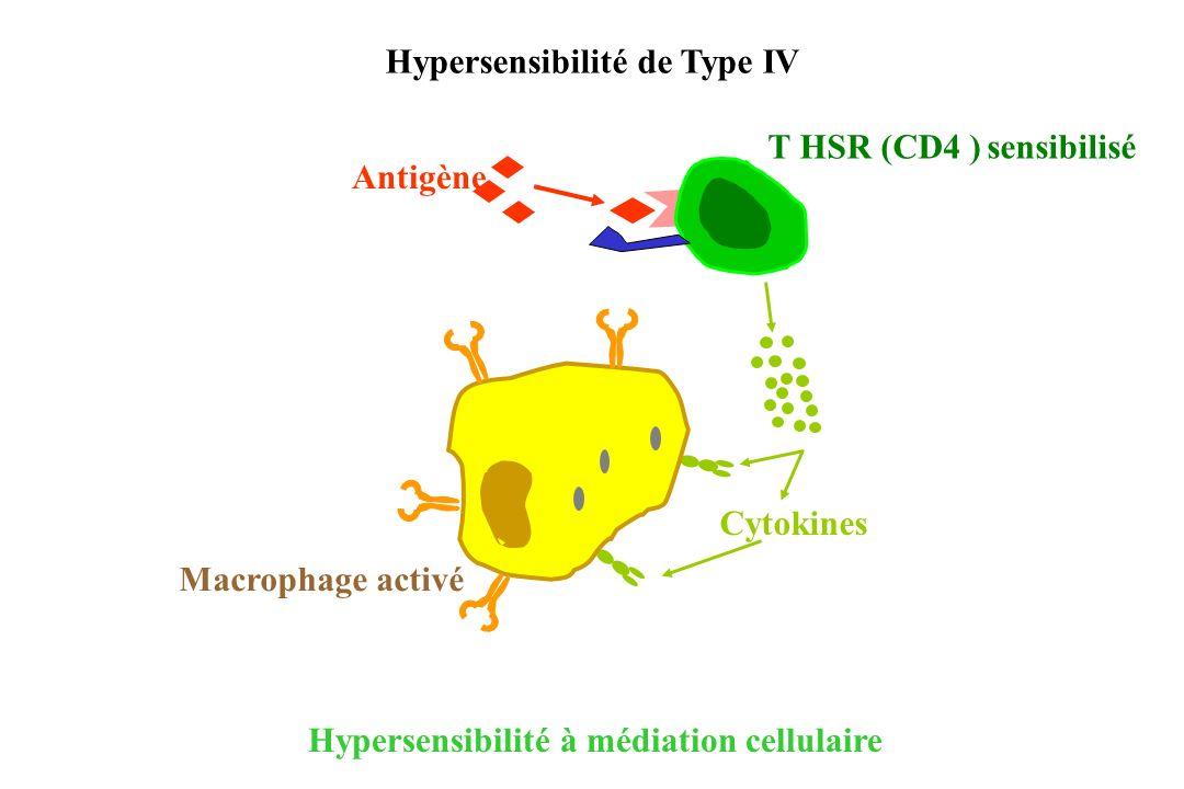 Hypersensibilité à médiation cellulaire