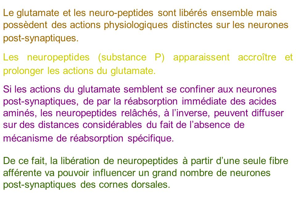 Le glutamate et les neuro-peptides sont libérés ensemble mais possèdent des actions physiologiques distinctes sur les neurones post-synaptiques.