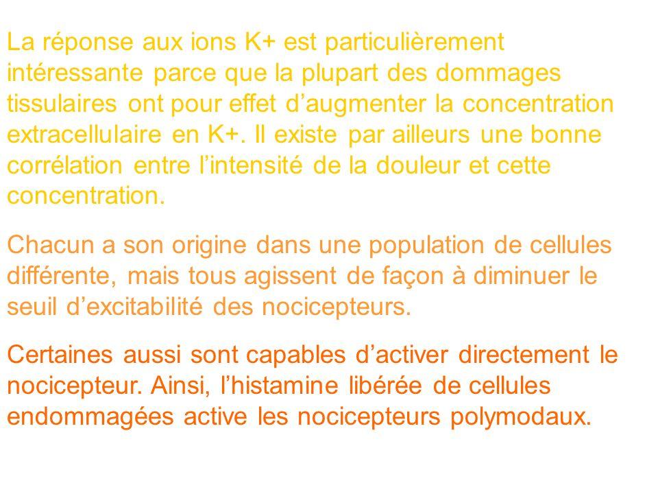La réponse aux ions K+ est particulièrement intéressante parce que la plupart des dommages tissulaires ont pour effet d'augmenter la concentration extracellulaire en K+. Il existe par ailleurs une bonne corrélation entre l'intensité de la douleur et cette concentration.