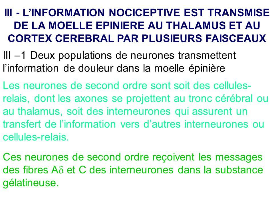 III - L'INFORMATION NOCICEPTIVE EST TRANSMISE DE LA MOELLE EPINIERE AU THALAMUS ET AU CORTEX CEREBRAL PAR PLUSIEURS FAISCEAUX