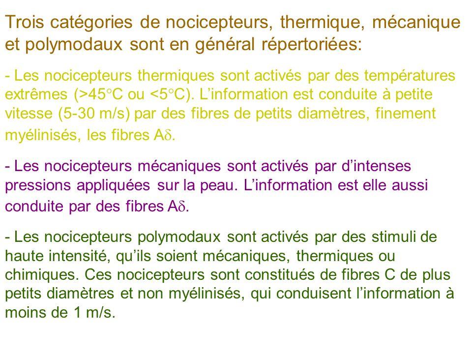 Trois catégories de nocicepteurs, thermique, mécanique et polymodaux sont en général répertoriées: