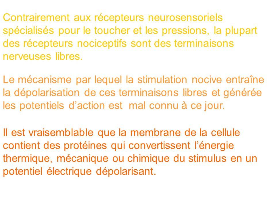 Contrairement aux récepteurs neurosensoriels spécialisés pour le toucher et les pressions, la plupart des récepteurs nociceptifs sont des terminaisons nerveuses libres.