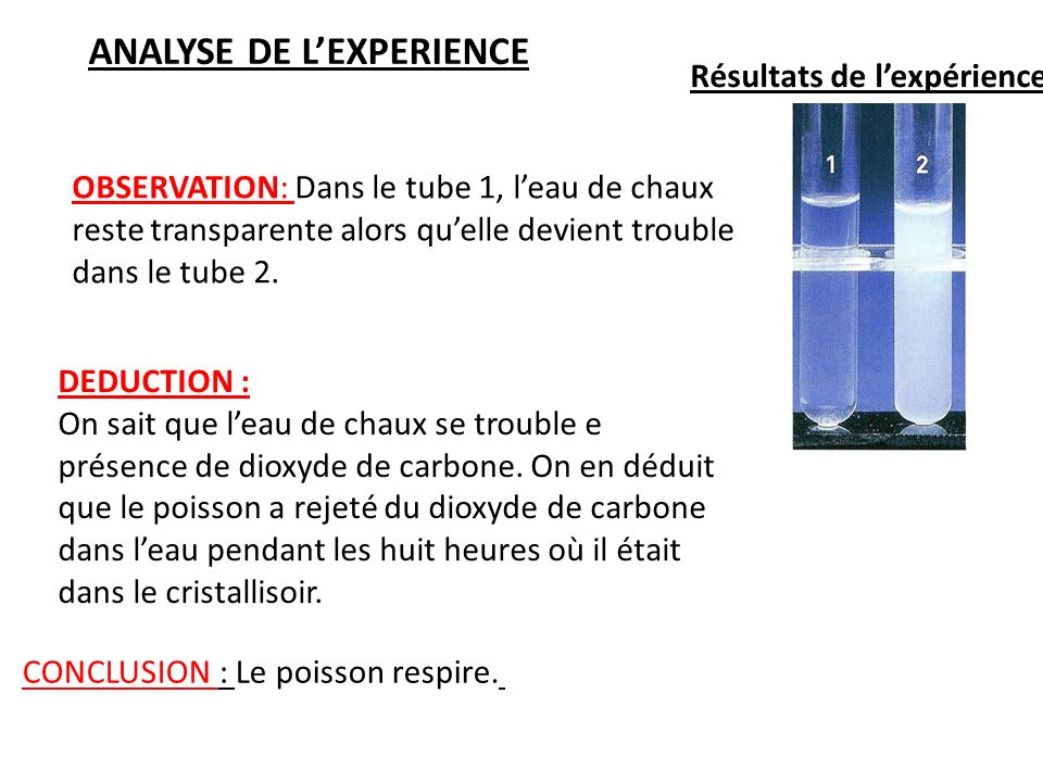ANALYSE DE L'EXPERIENCE