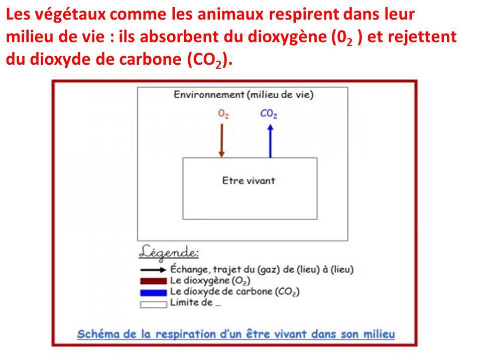 Les végétaux comme les animaux respirent dans leur milieu de vie : ils absorbent du dioxygène (02 ) et rejettent du dioxyde de carbone (CO2).