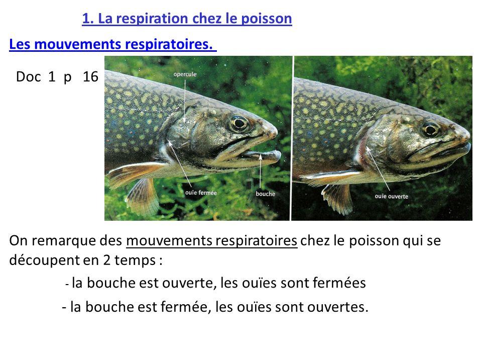 1. La respiration chez le poisson
