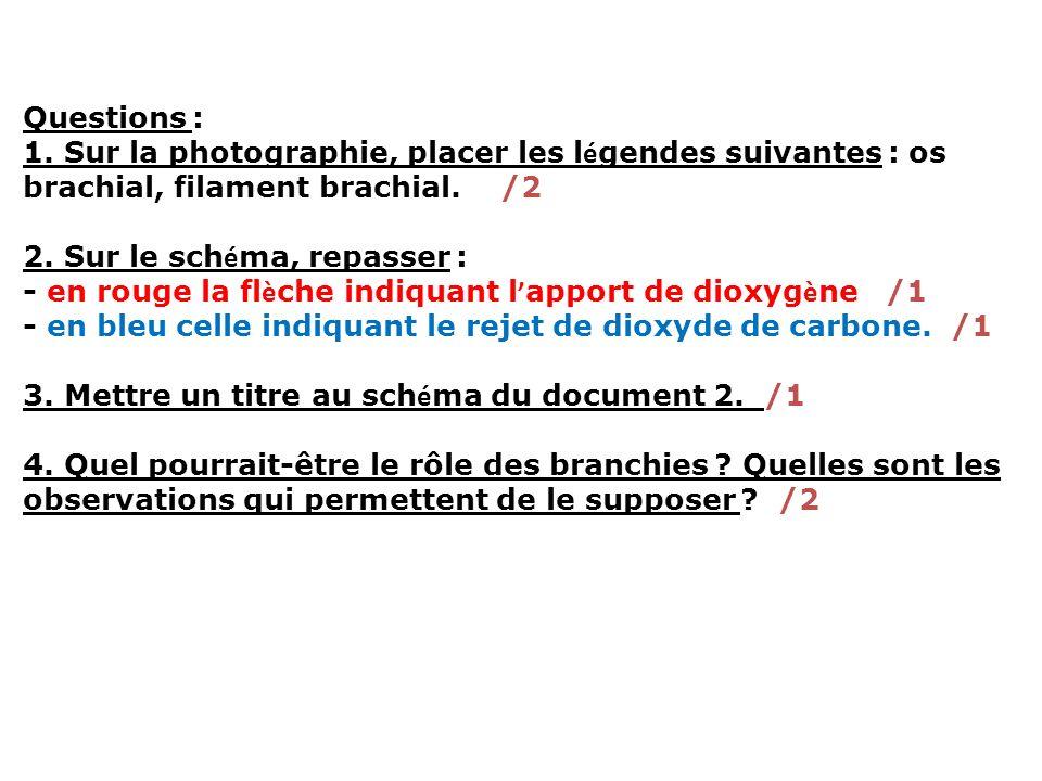 Questions :1. Sur la photographie, placer les légendes suivantes : os brachial, filament brachial. /2.