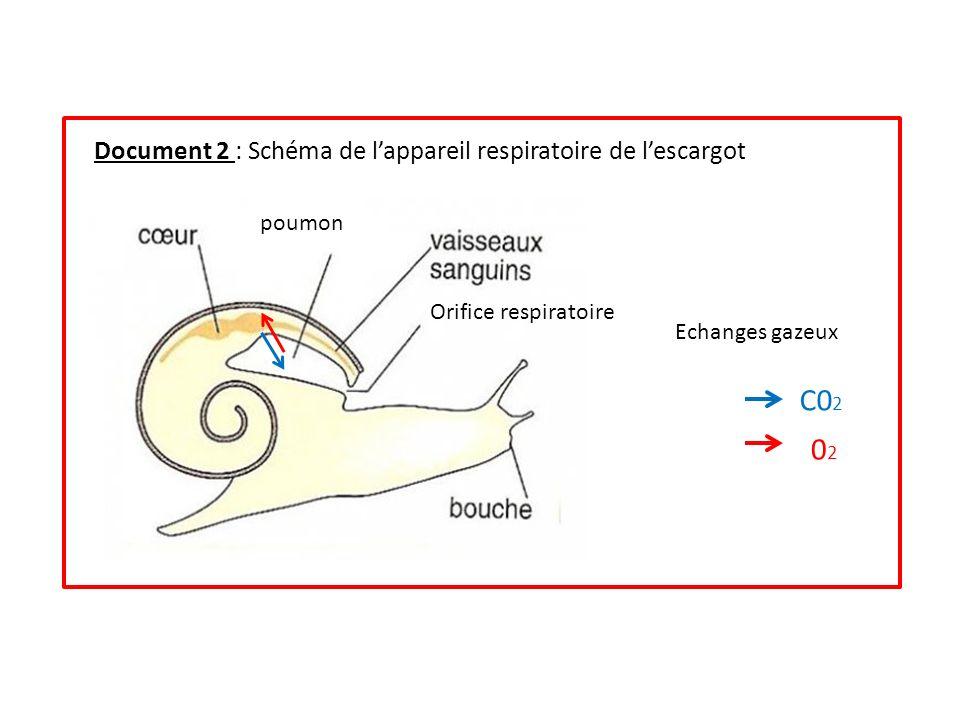 C02 02 Document 2 : Schéma de l'appareil respiratoire de l'escargot