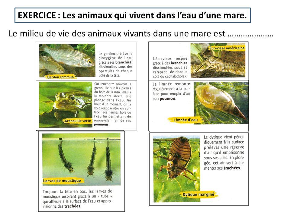 EXERCICE : Les animaux qui vivent dans l'eau d'une mare.