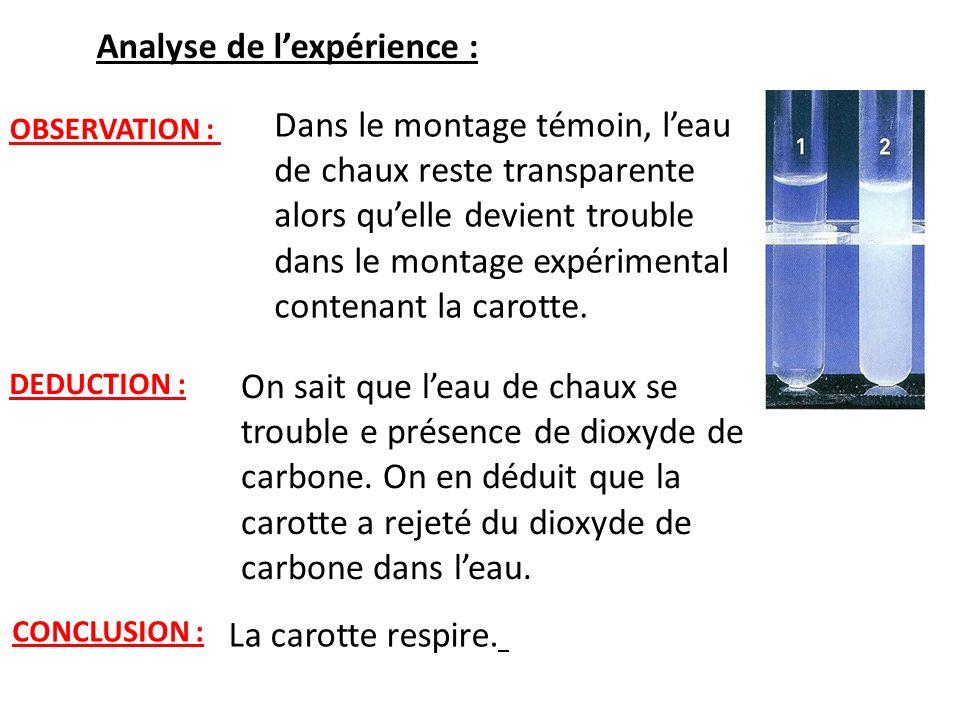 Analyse de l'expérience :