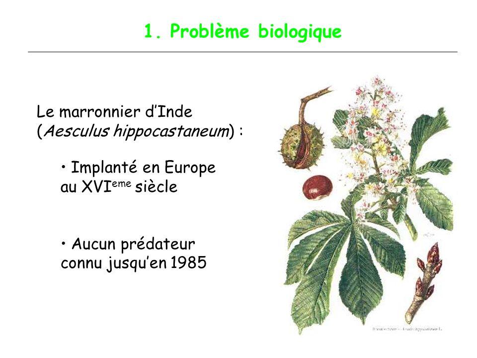 1. Problème biologique Le marronnier d'Inde (Aesculus hippocastaneum) : Implanté en Europe au XVIeme siècle.
