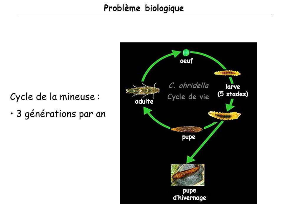 Cycle de la mineuse : 3 générations par an Problème biologique