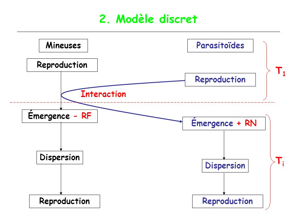 2. Modèle discret T1 Ti Mineuses Parasitoïdes Reproduction