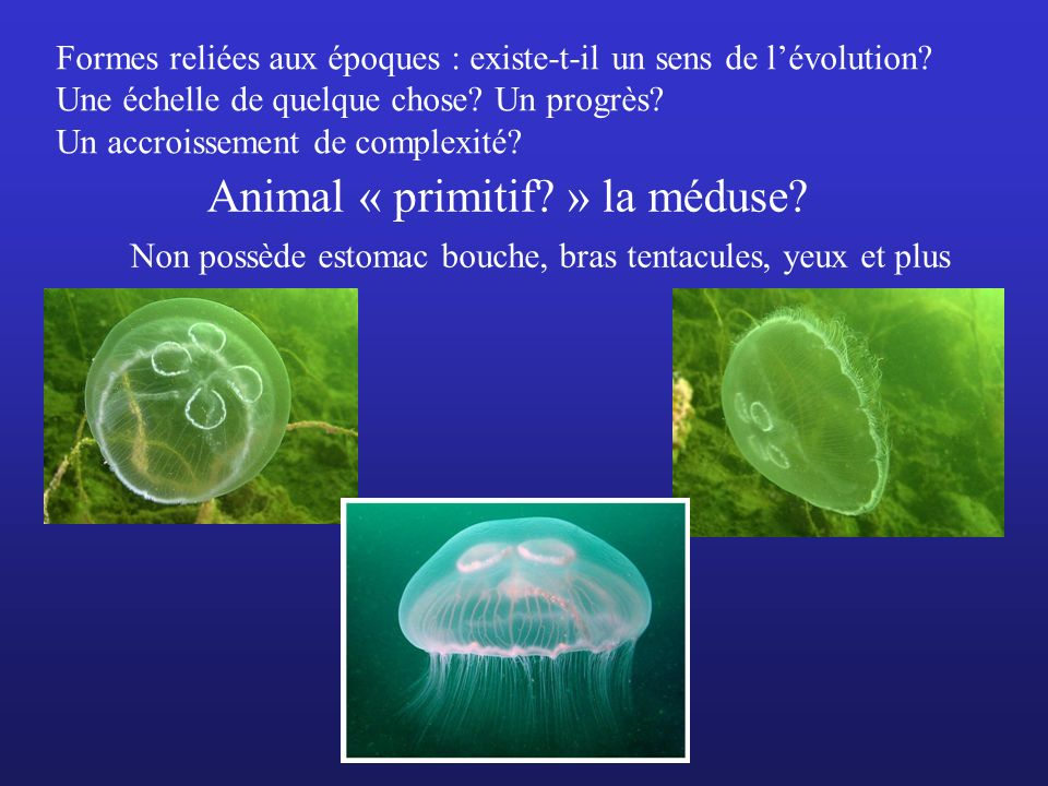 Animal « primitif » la méduse