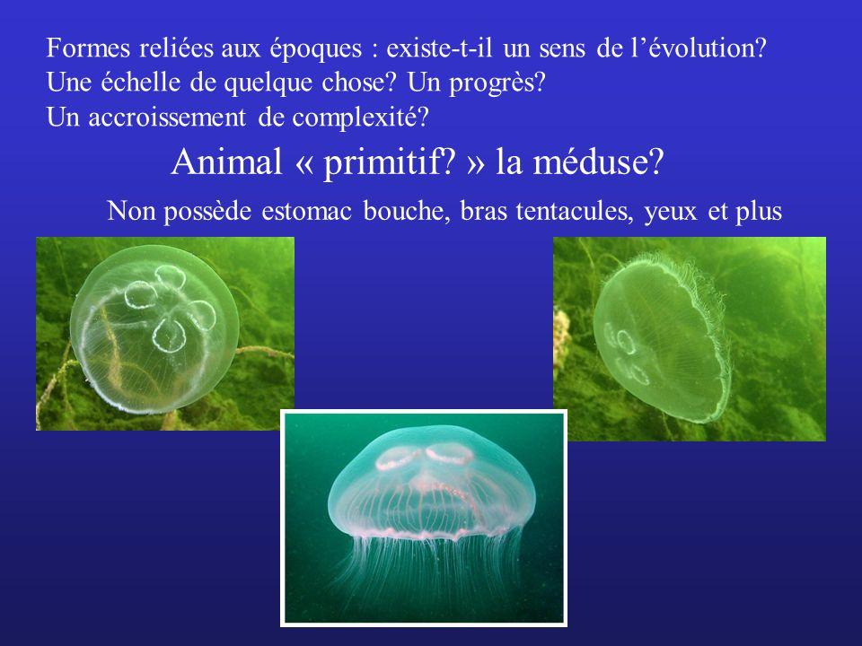 Animal « primitif » la méduse