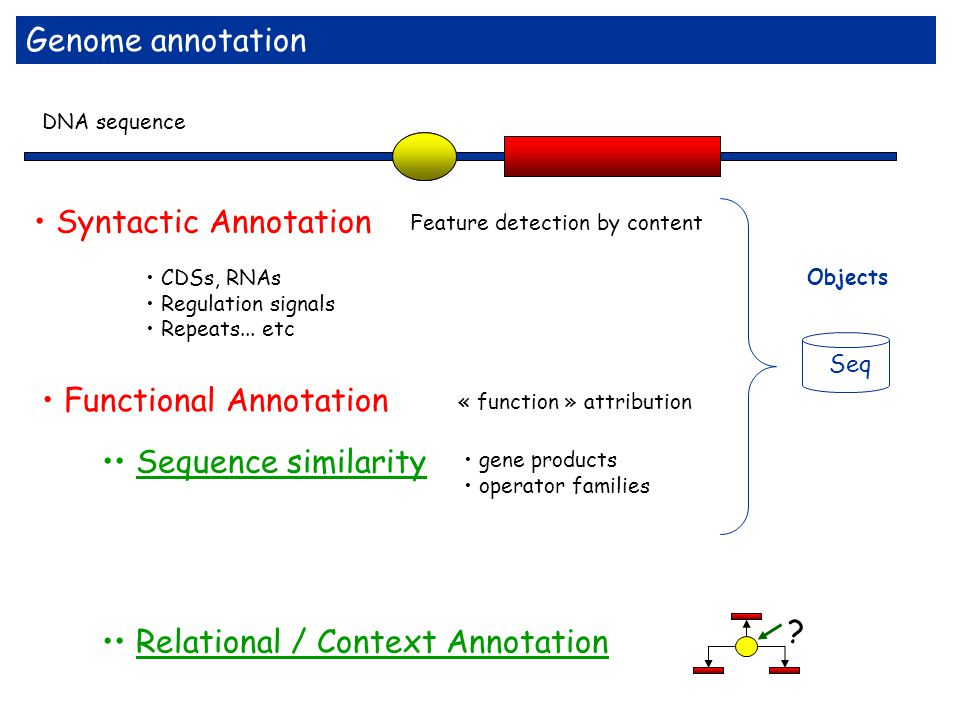 • Syntactic Annotation