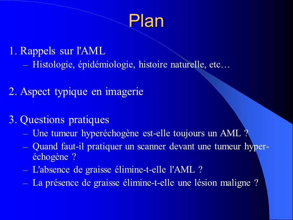 Plan 1. Rappels sur l AML 2. Aspect typique en imagerie