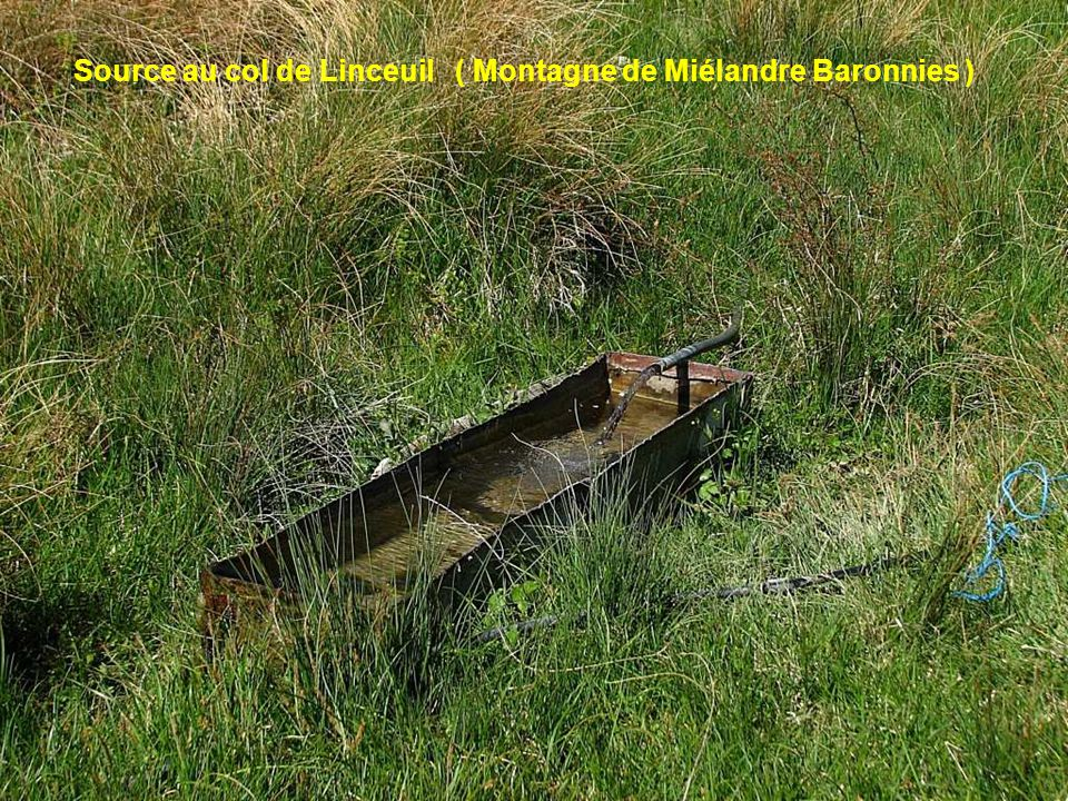 Source au col de Linceuil ( Montagne de Miélandre Baronnies )