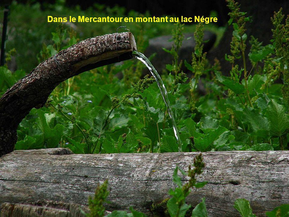 Dans le Mercantour en montant au lac Négre