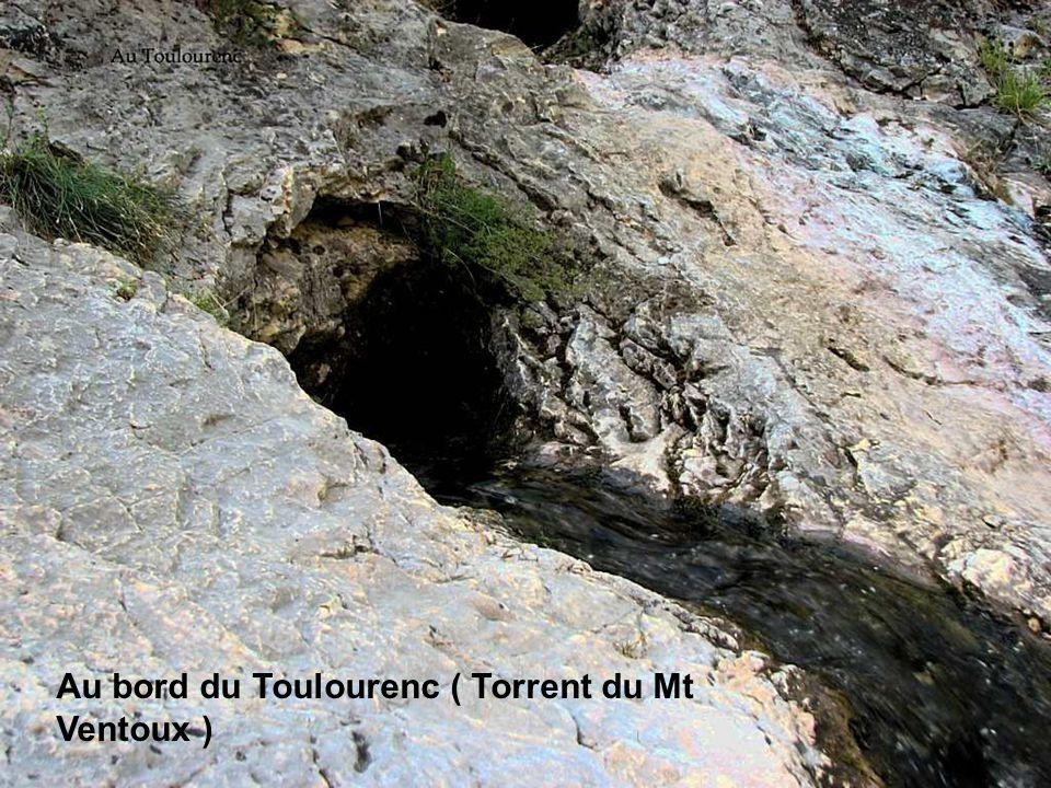 Au bord du Toulourenc ( Torrent du Mt Ventoux )